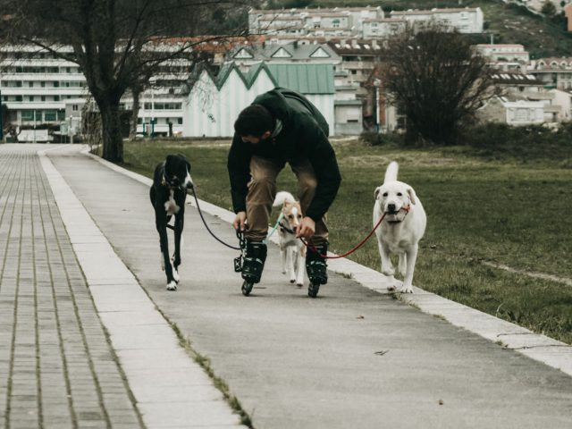 https://www.danielcanela.es/wp-content/uploads/2020/09/campamento-canino-daniel-canela-conducta-canina-640x480.jpg