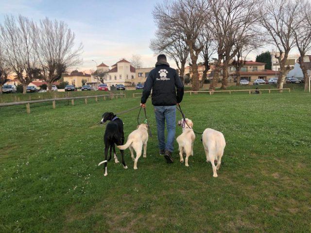 https://www.danielcanela.es/wp-content/uploads/2020/09/paseadores-caninos-daniel-canela-640x480.jpg